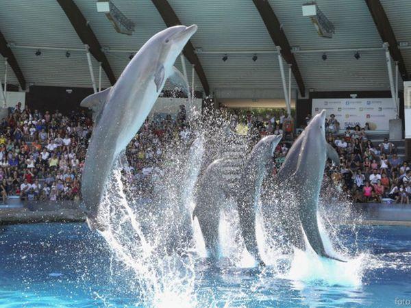 Oltremare - Delfini